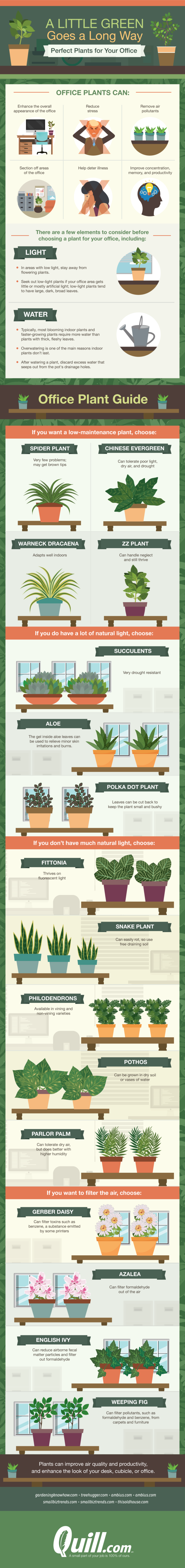 Perfect Office Plants -a little green goes a long way
