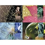 Medical Arts Press® Chiropractic Assorted Laser Postcards; Life