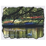 Medical Arts Press® Birthday Greeting Cards;  Swan On Lake Birthday Greeting, Blank Inside
