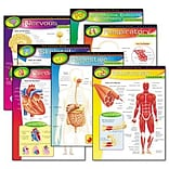 Trend® Learning Chart Combo Packs; Human Body