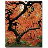 Trademark Fine Art David Farley Japanese Tree I Canvas Art 18x24 Inches