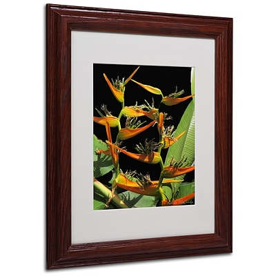Kathie McCurdy Tropical Paradise Matted Framed Art - 16x20 Inches - Wood Frame