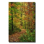 Trademark Fine Art Kurt Shaffer Fall Trail Canvas Art 14x19 Inches