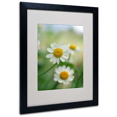 Kathy Yates Chamomile Matted Framed Art - 11x14 Inches - Wood Frame