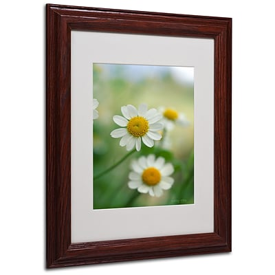 Kathy Yates Chamomile Matted Framed Art - 16x20 Inches - Wood Frame