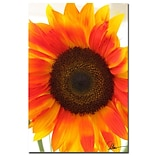 Trademark Fine Art Martha Guerra Sunflower VI Canvas Art