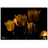 Trademark Fine Art Martha Guerra Tulips V Canvas Art, MG0174-C2232GG