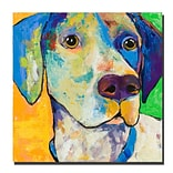 Trademark Fine Art Yancy by Colorful Attitudes-Ready to Hang Canvas! 14x14 Inches