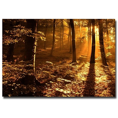 Trademark Fine Art Philippe Sainte Laudy Morning Light Canvas Art 30x47 Inches