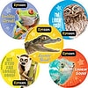 SmileMakers® Animal Eye Exam Stickers, 2-1/2H x 2-1/2W, 100/Roll
