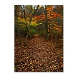 Trademark Fine Art Late Autumn Hike 35 x 47 Canvas Art