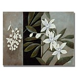 Trademark Fine Art White Fresh 26 x 32 Canvas Art