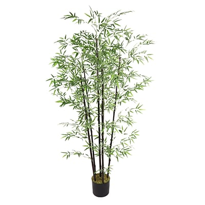 Laura Ashley 72 Bamboo Tree With Black Poles