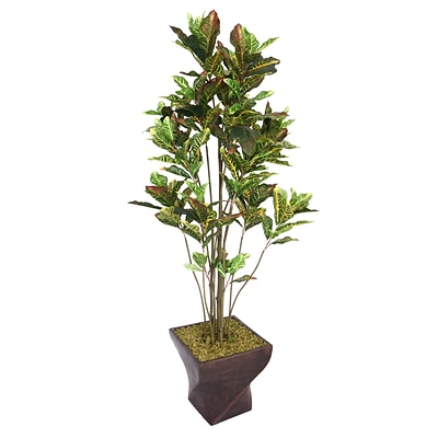 Laura Ashley 82 Croton Tree With Multiple Trunks in 17 Fiberstone Planter