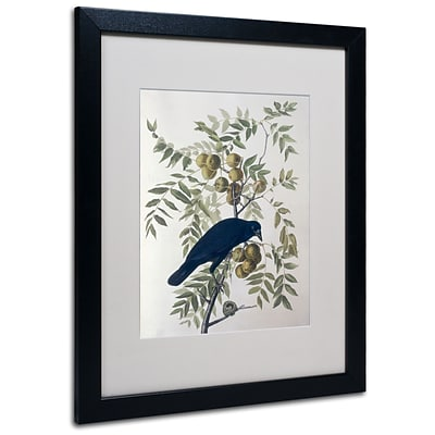 Trademark Fine Art American Crow 16 x 20 Black Frame Art