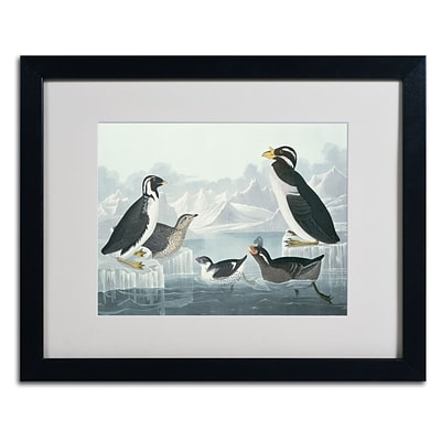 Trademark Fine Art Black-Throated Guillemot 16 x 20 Black Frame Art