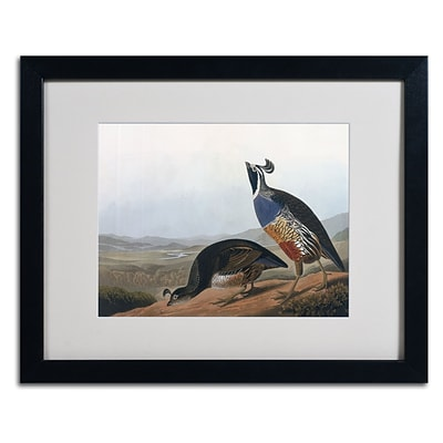 Trademark Fine Art Californian Partridge 16 x 20 Black Frame Art