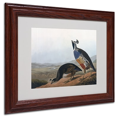Trademark Fine Art Californian Partridge 11 x 14 Wood Frame Art