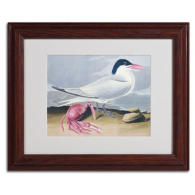 Trademark Fine Art Cayenne Tern 11 x 14 Wood Frame Art