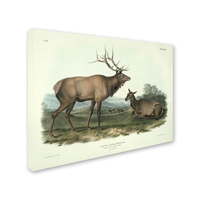 Trademark Fine Art Cervus Canadensis 35 x 47 Canvas Art