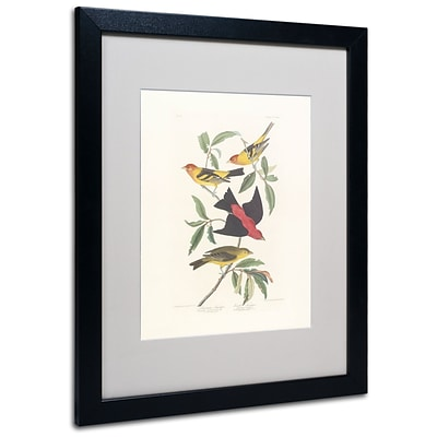 Trademark Fine Art Louisiana Tanager 16 x 20 Black Frame Art