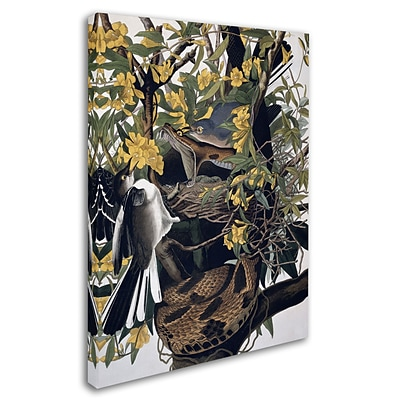 Trademark Fine Art Mocking Birds and Snake 24 x 32 Canvas Art