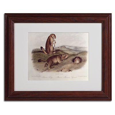 Trademark Fine Art Prairie Dog 11 x 14 Wood Frame Art