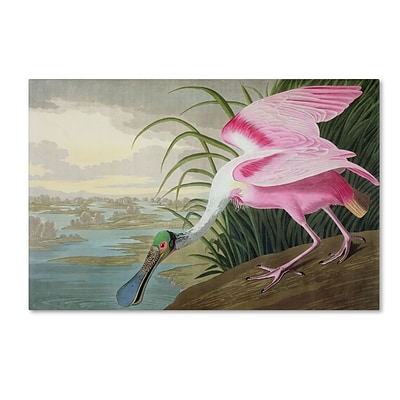 Trademark Fine Art Roseate Spoonbill 16 x 24 Canvas Art