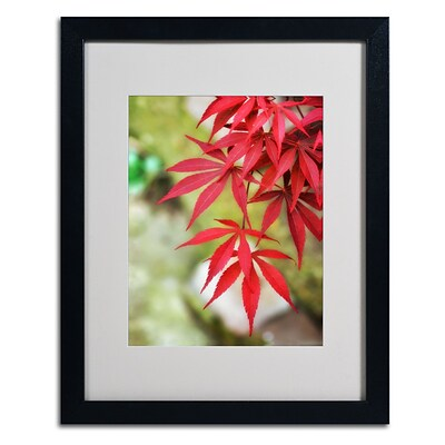 Trademark Fine Art Japanese Maple 16 x 20 Black Frame Art
