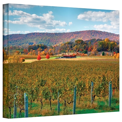 ArtWall Vineyard in Autumn Gallery Wrapped Canvas Art By Steve Ainsworth, 24 x 36