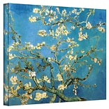 20x24 Almond Blossom Wrapped Canvas Art