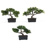 4121 12 Bonsai Set of 3 Plant in Pot