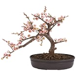 4764 Cherry Blossom Bonsai Tree in Pot