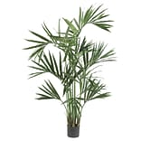 5308 6 Kentia Palm Tree in Pot