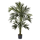 5341 6 Kentia Silk Tree in Pot