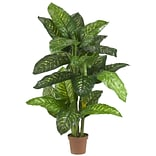 6573 5 Dieffenbachia Plant in Pot