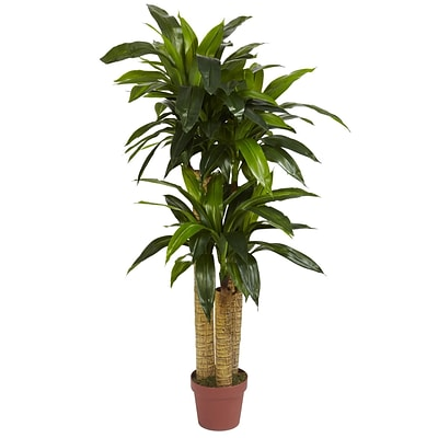 Nearly Natural 6648 4 Corn Stalk Plant in Pot