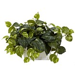 6713 Pothos Plant in White Wash Planter