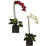 4757 Phaleanopsis Orchid Set of 2; Assorted