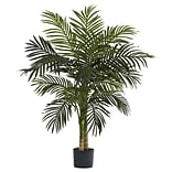 5357 4 Golden Cane Palm Tree in Pot