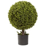 5919 27 Boxwood Ball Topiary Plant in Pot