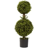 35 Double Boxwood Topiary Plant in Pot