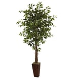 5931 6 Ficus Plant in Planter