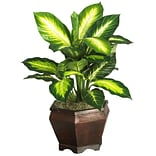 6592 Golden Dieffenbachia Silk Plant in Pot