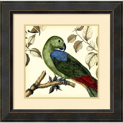 Amanti Art Tropical Parrot III Framed Art Print by Martinet, 23.38H x 23.38W