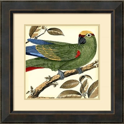 Amanti Art Tropical Parrot I Framed Art Print by Martinet, 23.38H x 23.38W