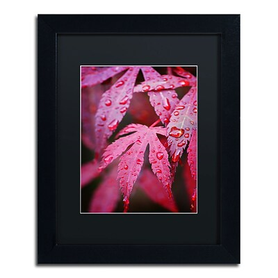 Trademark Philippe Sainte-Laudy Red Maple Leaves Art, Black Matte With Black Frame, 11 x 14