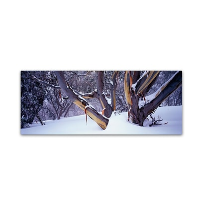 Trademark David Evans Highcountry Snowgums Gallery-Wrapped Canvas Art, 8 x 24