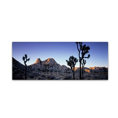 Trademark David Evans Joshua Tree-NP Gallery-Wrapped Canvas Art, 16 x 47