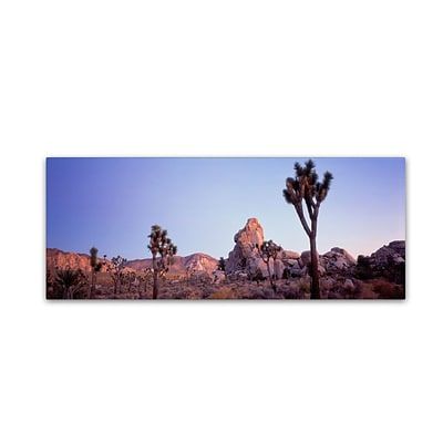 Trademark David Evans Mojave Glow-Joshua Tree NP Gallery-Wrapped Canvas Art, 16 x 47